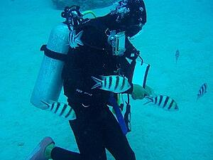 older adults are diving into scuba