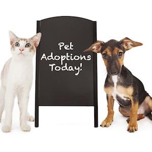 pet-adoptions