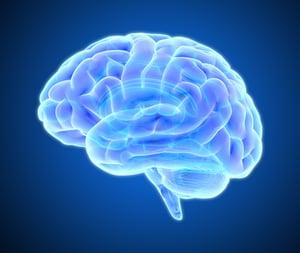 brain-study-male-female