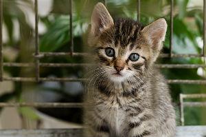 Feral-Cat-Program