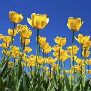 healthy_ways_older_adults_enjoy_spring_fight_allergies